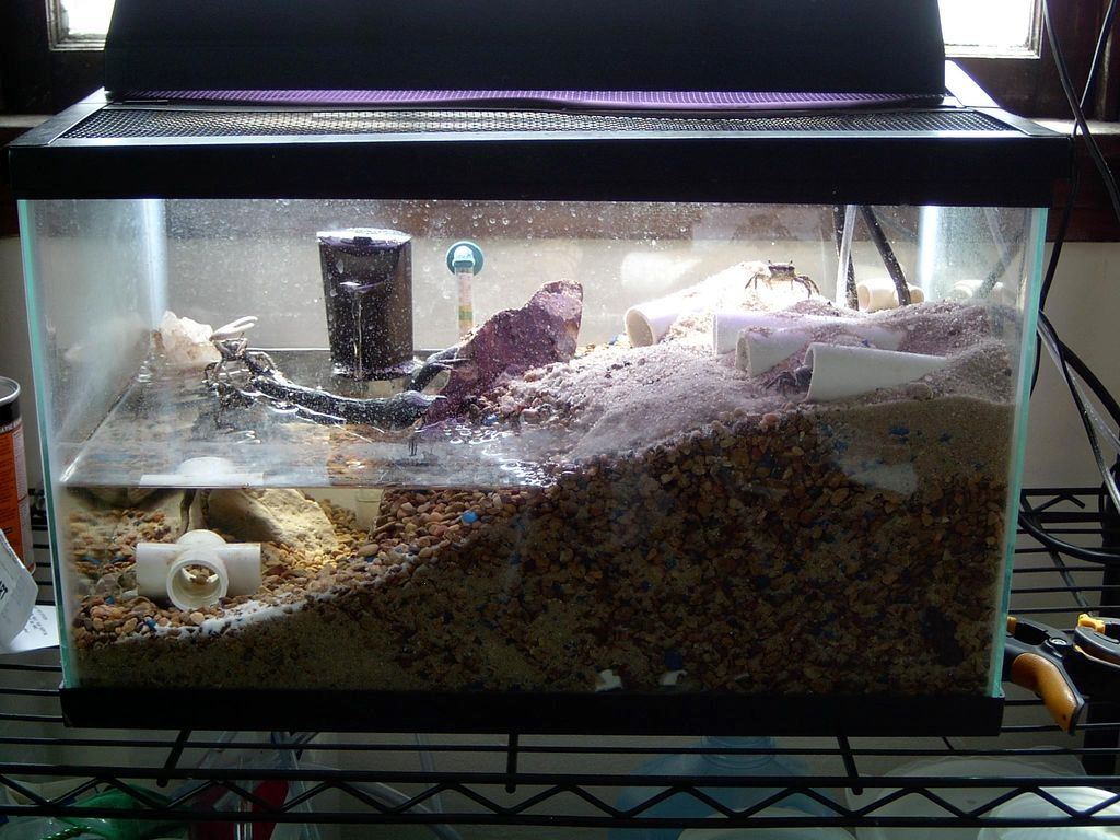 Pvc fiddler crab caves fiddler crabs for Fish caves for aquarium