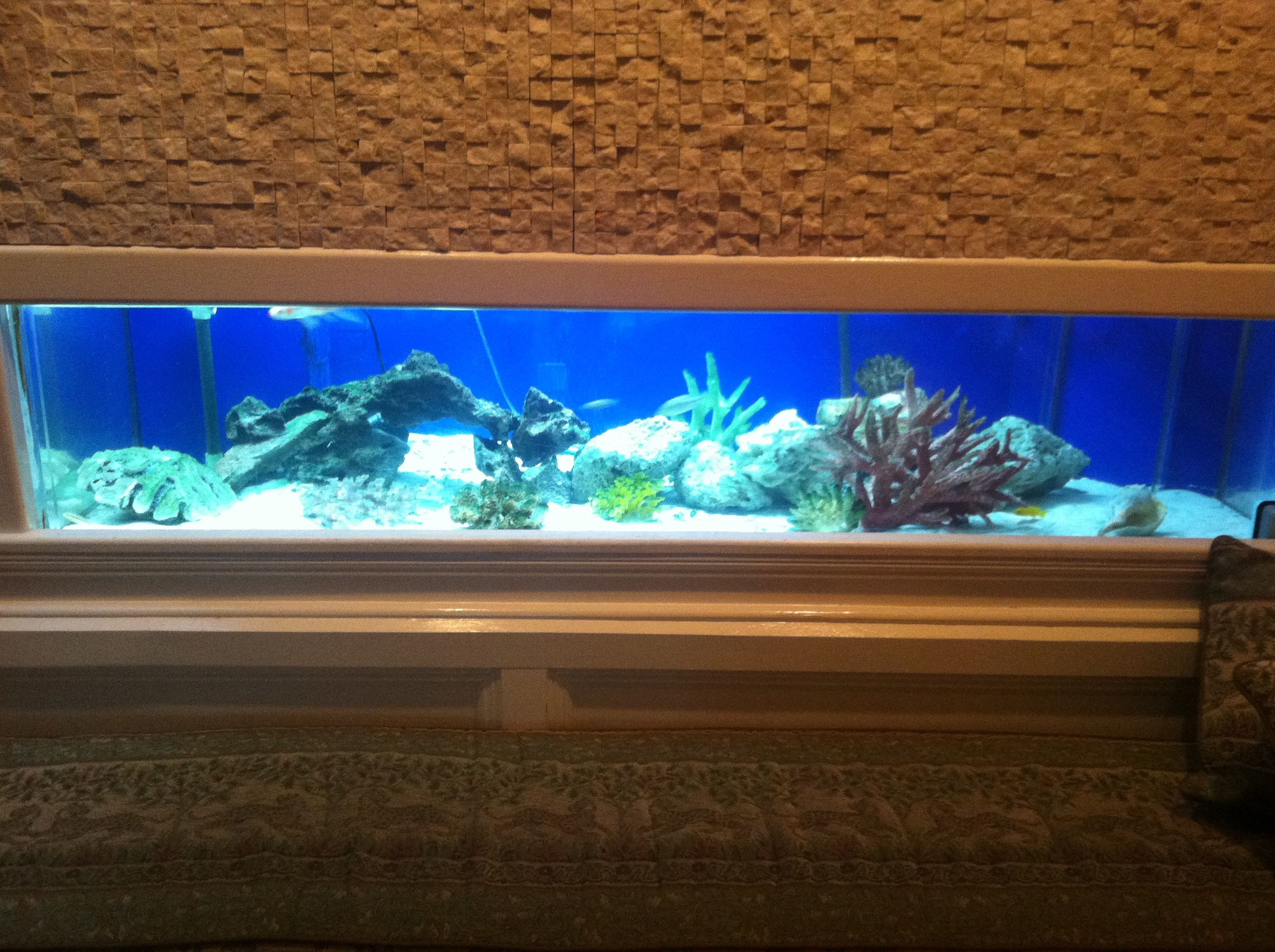 300 Gallon African Cichlids Freshwater Tank built into the wall of a