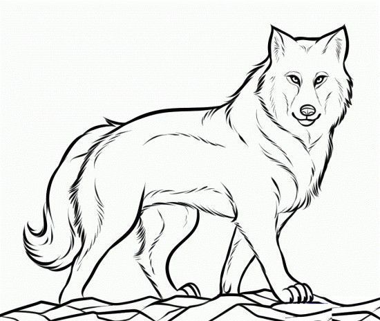 realistic wolf coloring pages wolf pictures to color coloringspace - Realistic Werewolf Coloring Pages