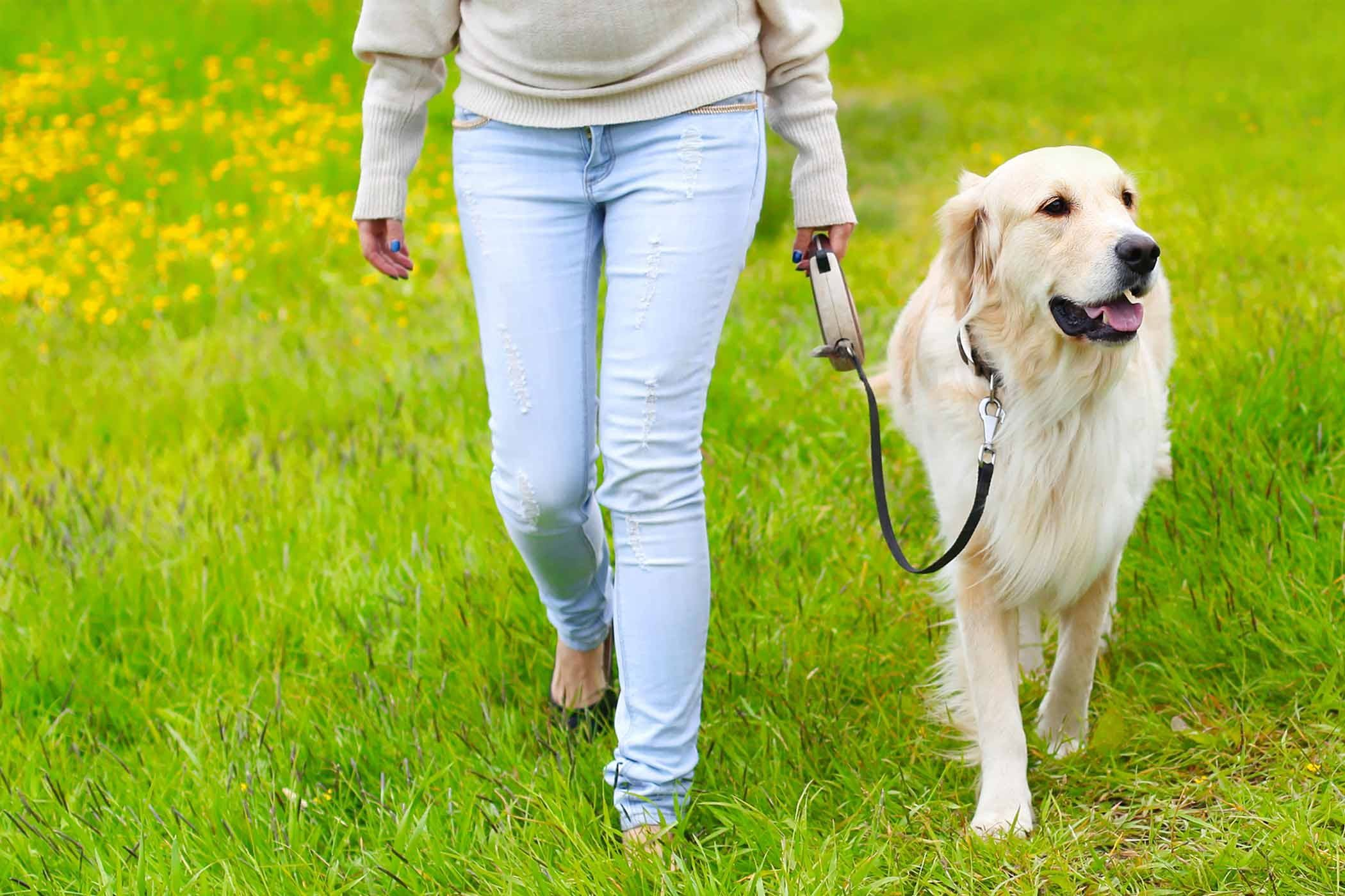 How to train your dog to heel dog clicker training