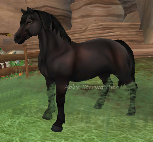 Star Stable Database Clothes gallery