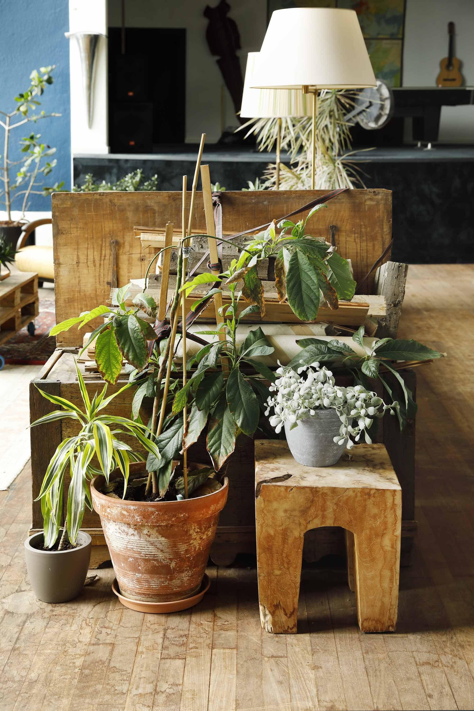 Vintage interieur met planten | Vintage interior with plants ...