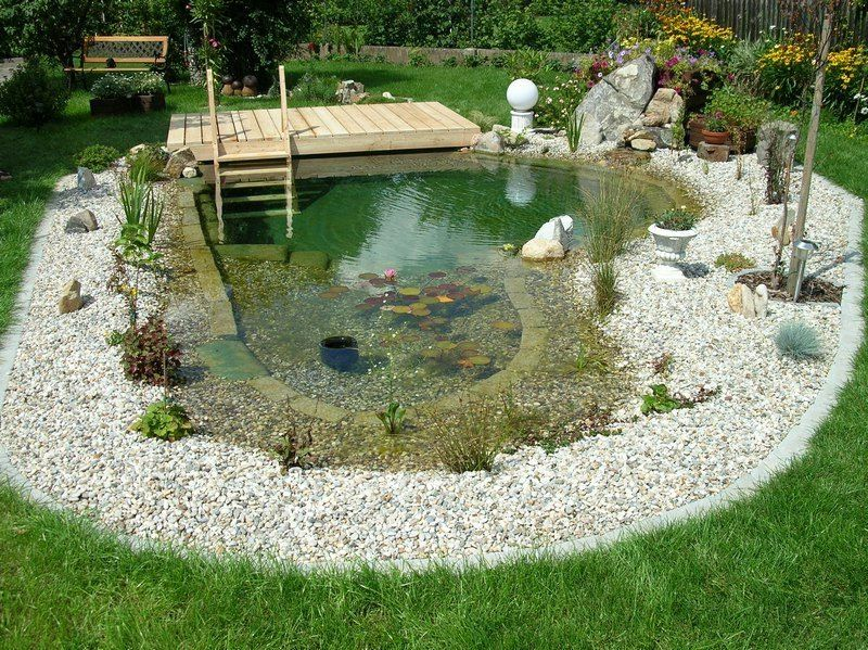 Naturpool 9 Bestrittene Mythen Garten Pooldesign Zenideen Swimming Pool Pond Natural Swimming Ponds Fountains Outdoor