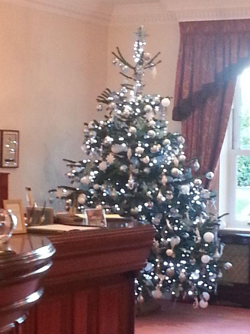 Office Christmas Trees real traditional christmas trees