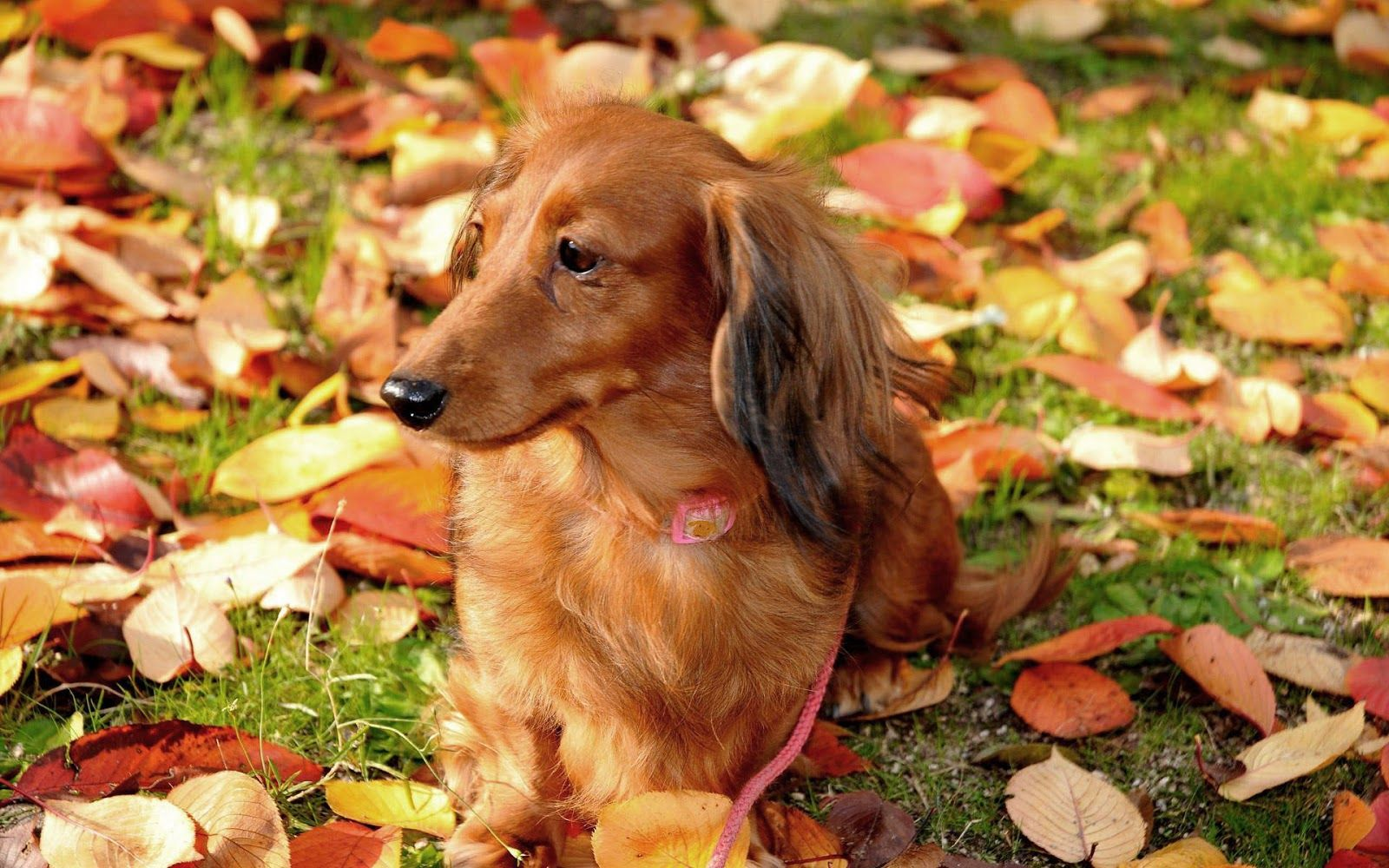 Pin By Vickie Lane Taylor On Fall In Love Dog Wallpaper Animal Wallpaper Animal Photo