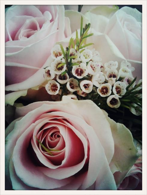 Lovely wedding flowers, Sweet Avalanche roses by Meijer Roses.
