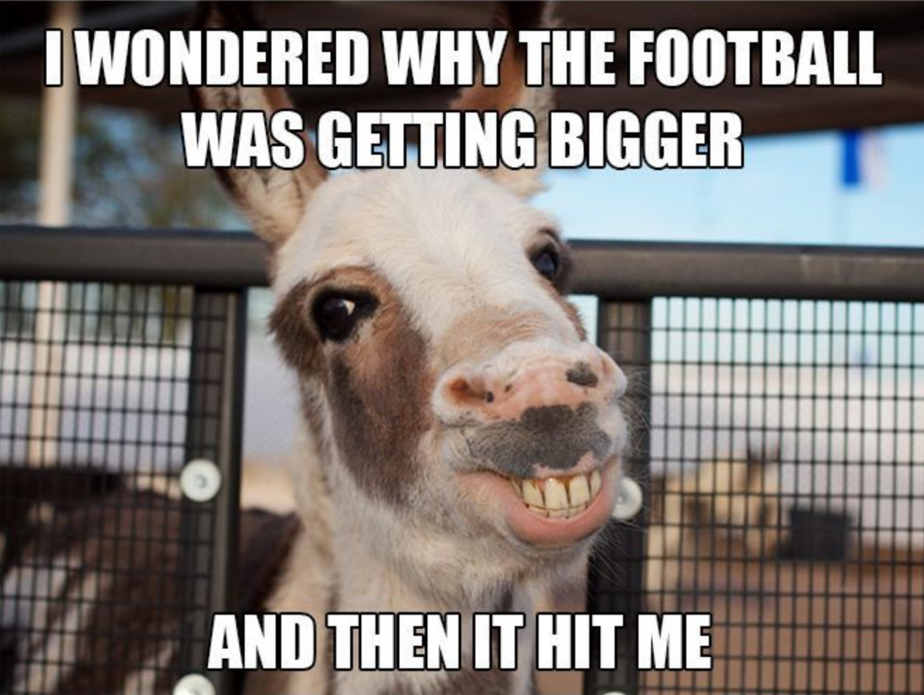 Really Funny Meme Jokes : Esel football getting bigger ball hit me animal meme memes