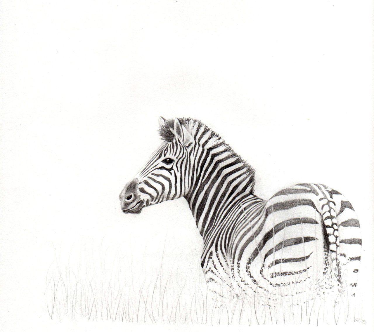 Zebra Drawing - Google Search
