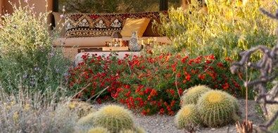 Xeriscaping Ideas Landscaping Network Xeriscape Xeriscape Landscaping Arizona Backyard