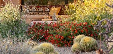Xeriscape Garden In Bloom Boxhill Landscape Design Tucson, AZ