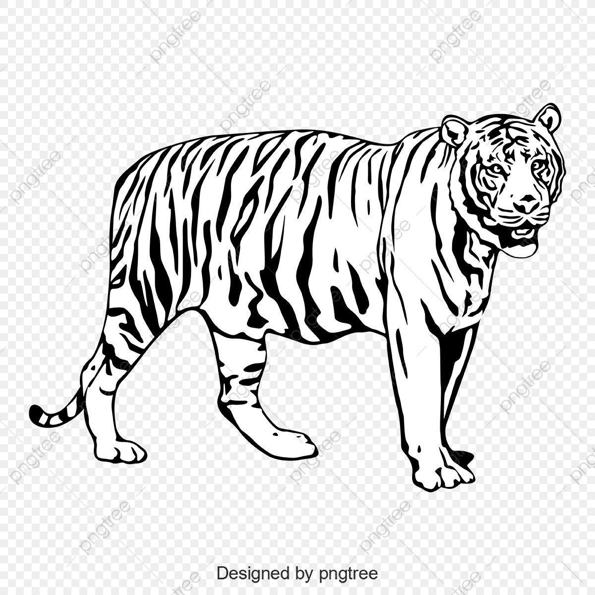 Hitam Dan Putih Harimau Seluruh Badan Seperti Bayang Haiwan Cahaya Png Dan Vektor Untuk Muat Turun Percuma Menggambar Harimau Kartun Gambar Hewan