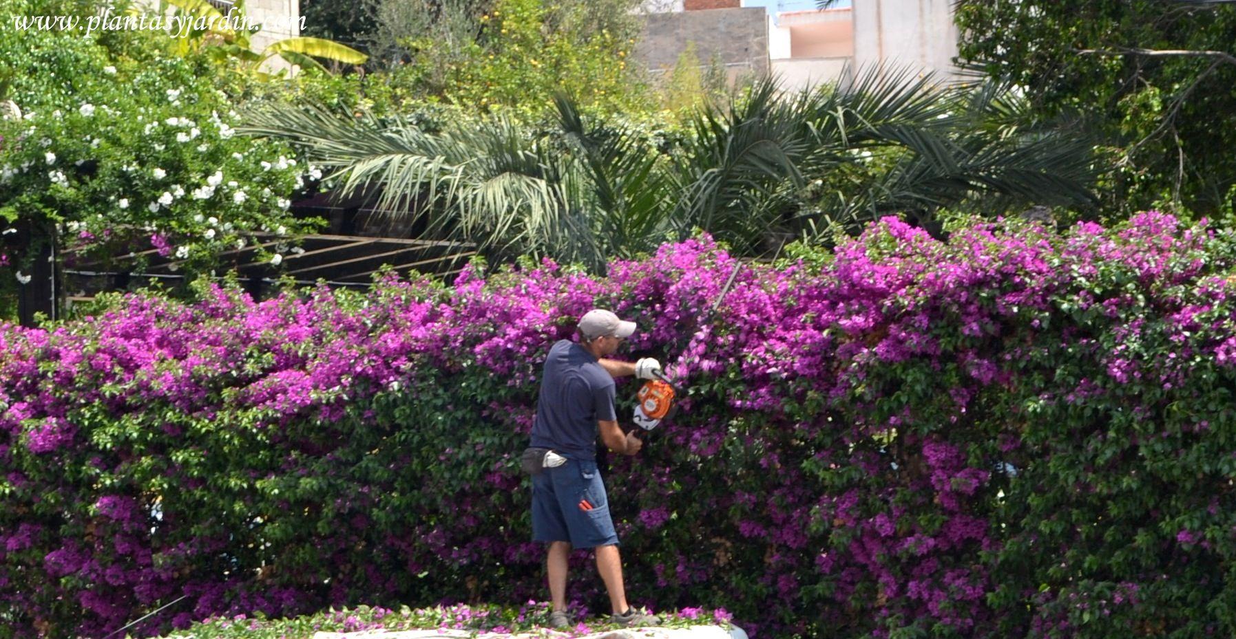 Cerco santa rita cercos pinterest cercos vivos - Arbustos para jardin ...