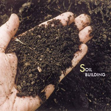If You Are Creating A Container Garden, Your Soil Needs To Have Ample  Drainage And