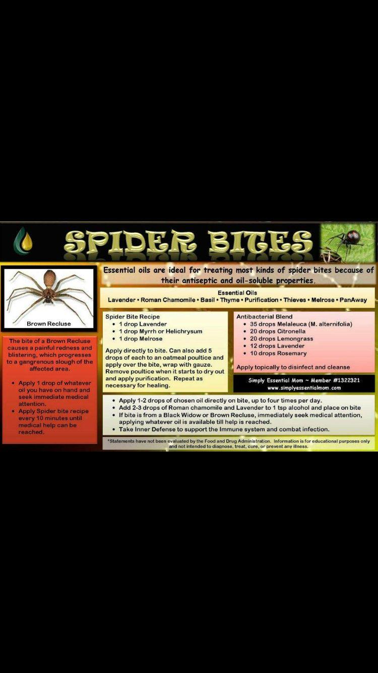 Treating spider bites