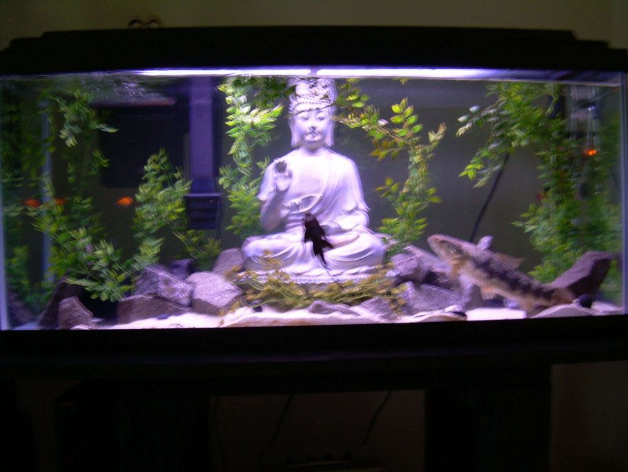 decoration aquarium zen