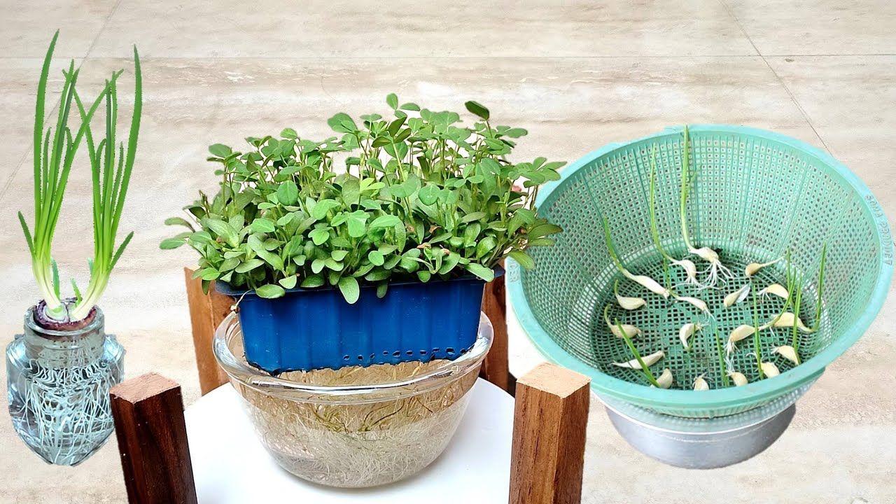 Hydroponic system के बारे में जाने सबकुछ Grow plants in