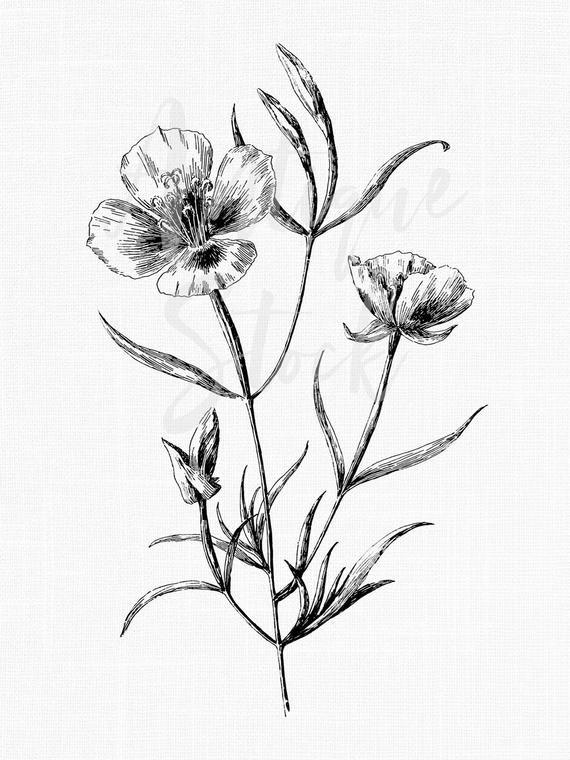 Flower Clipart Digital Download Botanical Illustration Etsy Line Art Images Flower Clipart Botanical Illustration