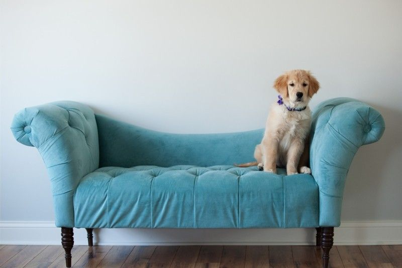 Golden Retrievers Puppies For Sale Orland Park Il Winnie
