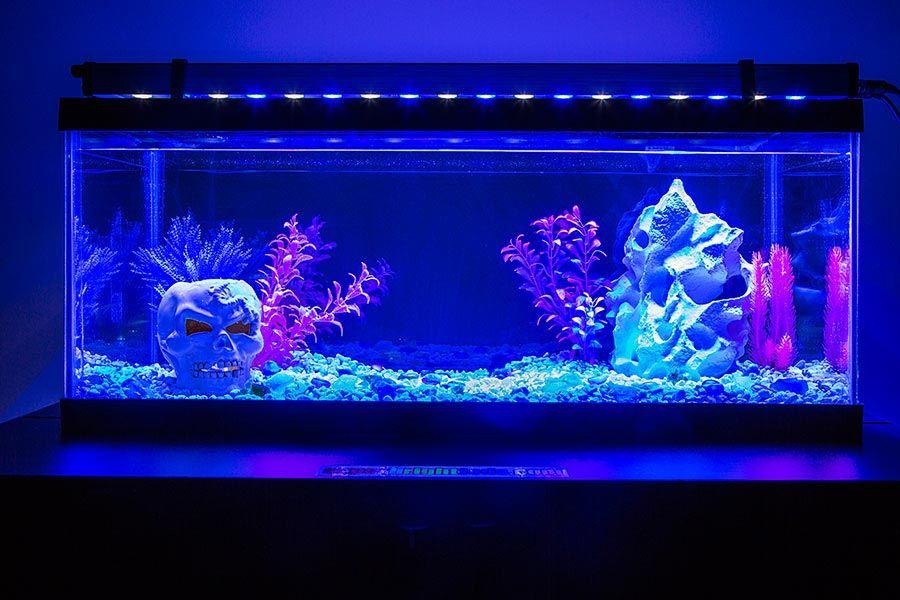 led aquarium light blue white variable salt fresh water aesthetic