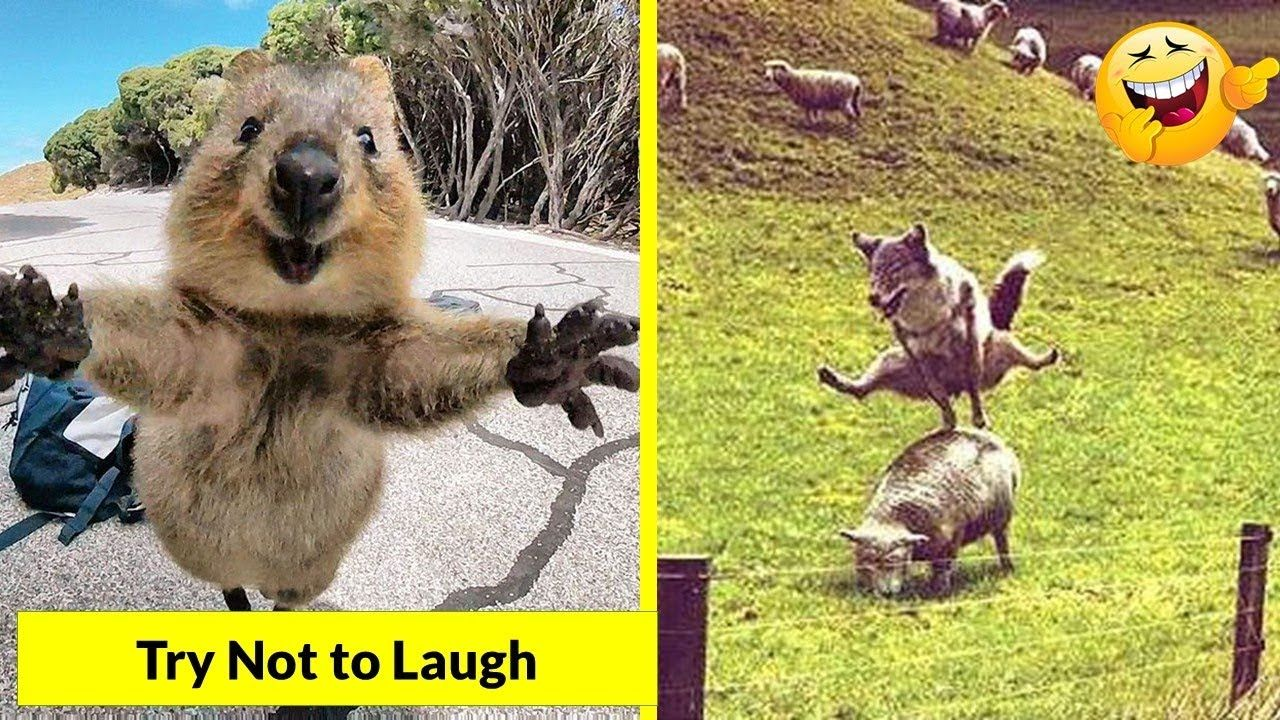 Funny animals that will make you laugh 😂😂😂 Funny animals