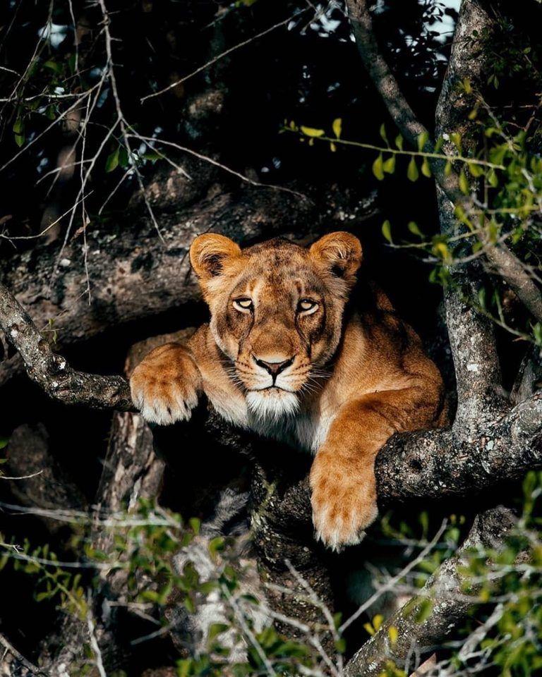 النمور في العالم خلفيات حيوانات مفترسة Hd Animals Wildlife Animals Wild Cats