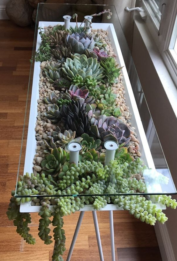 Photo of 100+ Gorgeous Succulent Plants Ideas For Indoor And Outdoor Full Of Aesthetics –