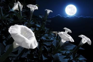How to plant a magical moon garden blooming flowers moon and plants these are beautiful ignor the part about nighttime rituals plant a magical moon garden plant a garden with night blooming flowers mightylinksfo