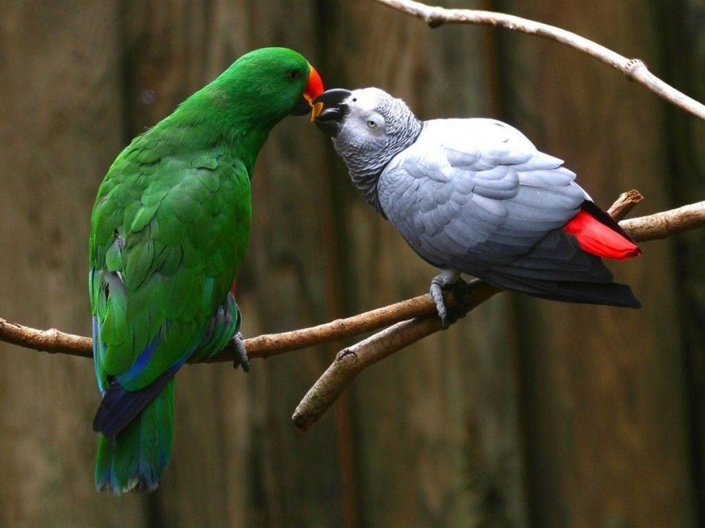 40 beautiful parrot hd wallpapers that you will surely love 40 beautiful parrot hd wallpapers that you will surely love voltagebd Images