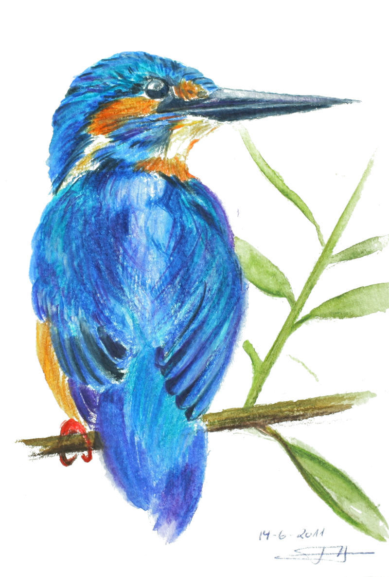 ijsvogel kingfisher eisvogel tekening tanja hilgers