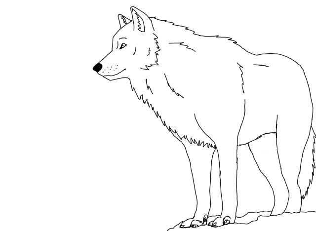 snow_wolf_outlines_by_blacklightning95 d4rdidujpg 640468
