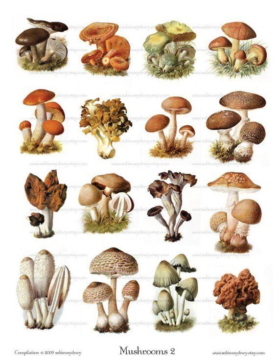 Vintage Mushroom Illustrations 2 Digital Collage By Imagearts 3 99 Vintage Mushroom Illustration Stuffed Mushrooms Mushroom Art