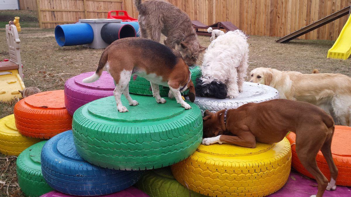 Image Result For Dog Enrichment Activities Dog Enrichment Dog