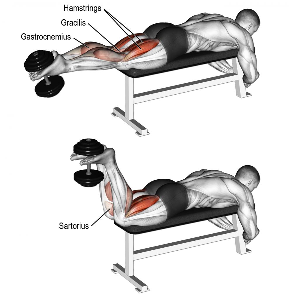 Comment effectuer l'exercice leg extension avec haltère en ...