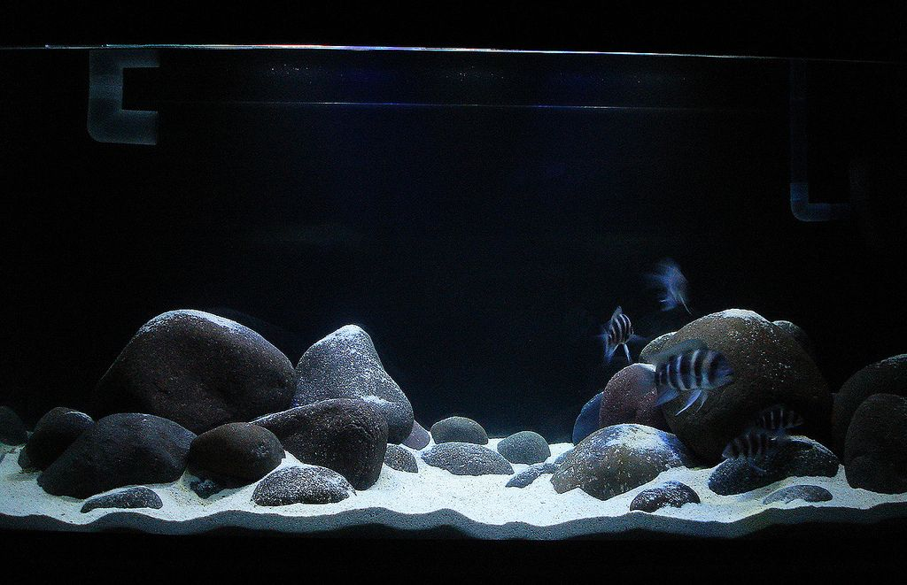 River rock aquarium cichlid forum type of rock for a for Rocks for fish tank