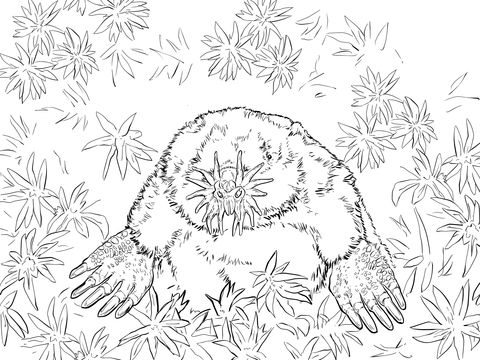 Realistic Star Nosed Mole Coloring Page Free Printable Coloring Pages Star Coloring Pages Coloring Pages Animal Coloring Pages