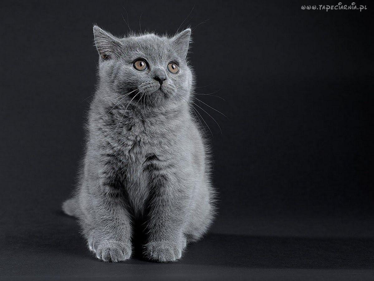 Pin By Beti0x On Tapety Zwierzeta Tapeciarnia Pl Animals Cats