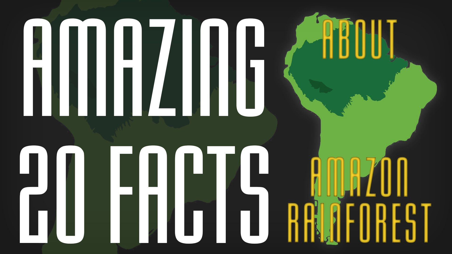 Top 20 Amazon Rainforest Facts That Will Be Amazing For