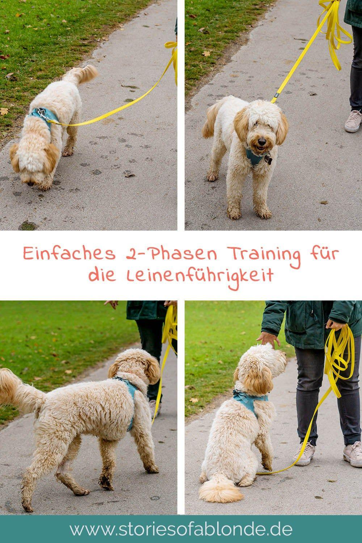 Richtig Gassi Gehen Leinenfuhrigkeit Beim Hund Hunde Erziehen