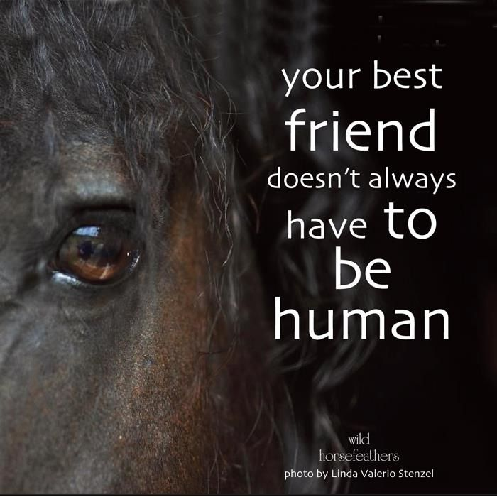 My Soul Mates Inspirational Horse Quotes Horse Riding Quotes Horse Quotes