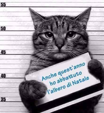 ciao sono fulmine il gatto di sofia | Gattini divertenti, Foto ...