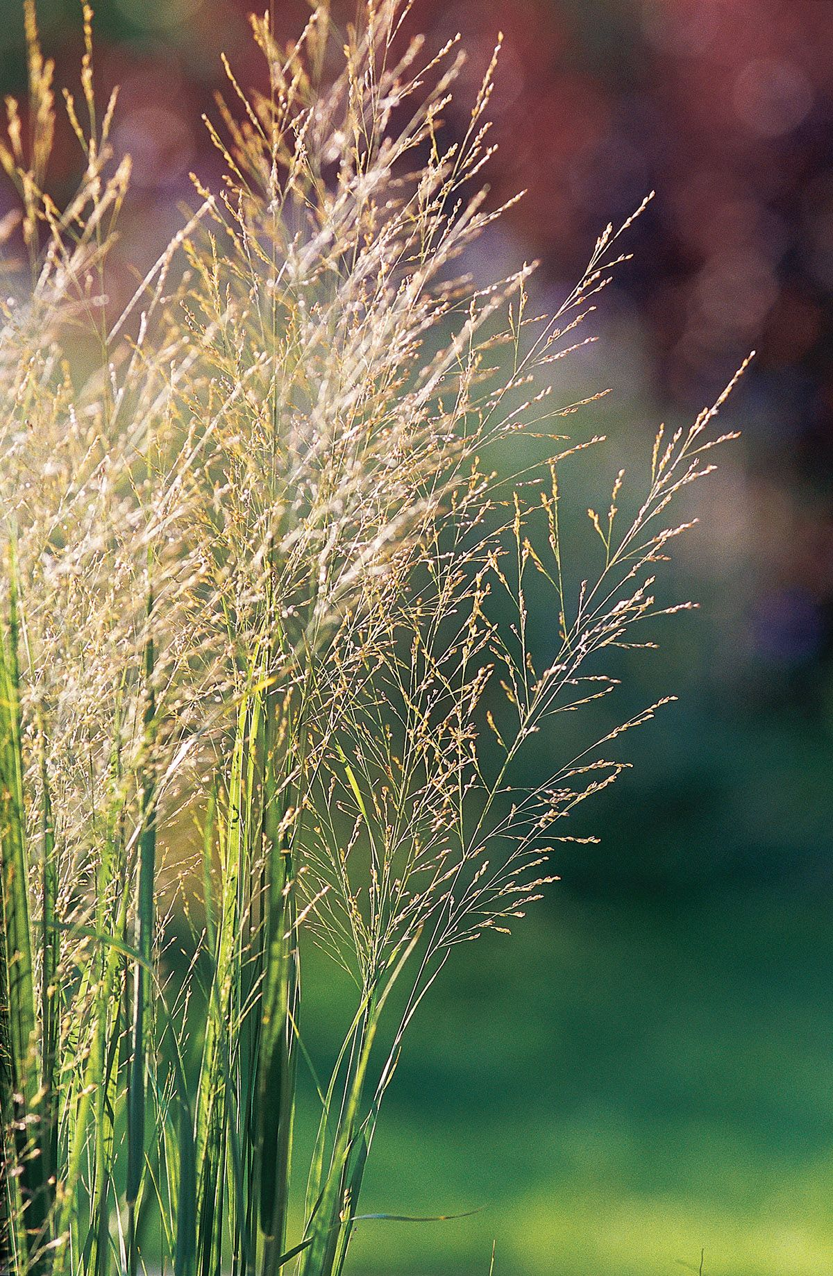 21 Of The Best Ornamental Grasses To Add Unbeatable Texture To Your Garden Ornamental Grasses Planting In Clay Perennials