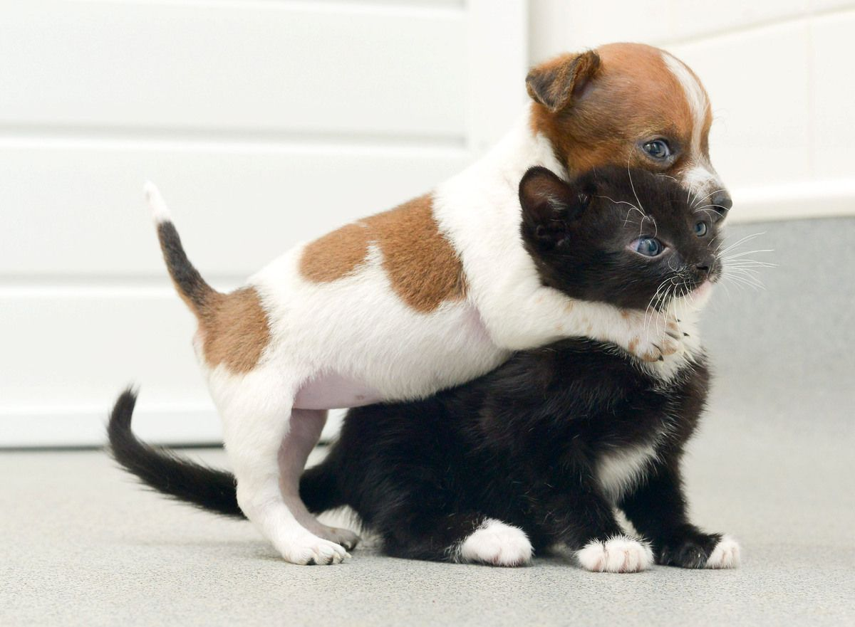 Kitten and puppy think they are siblings i luv all animals