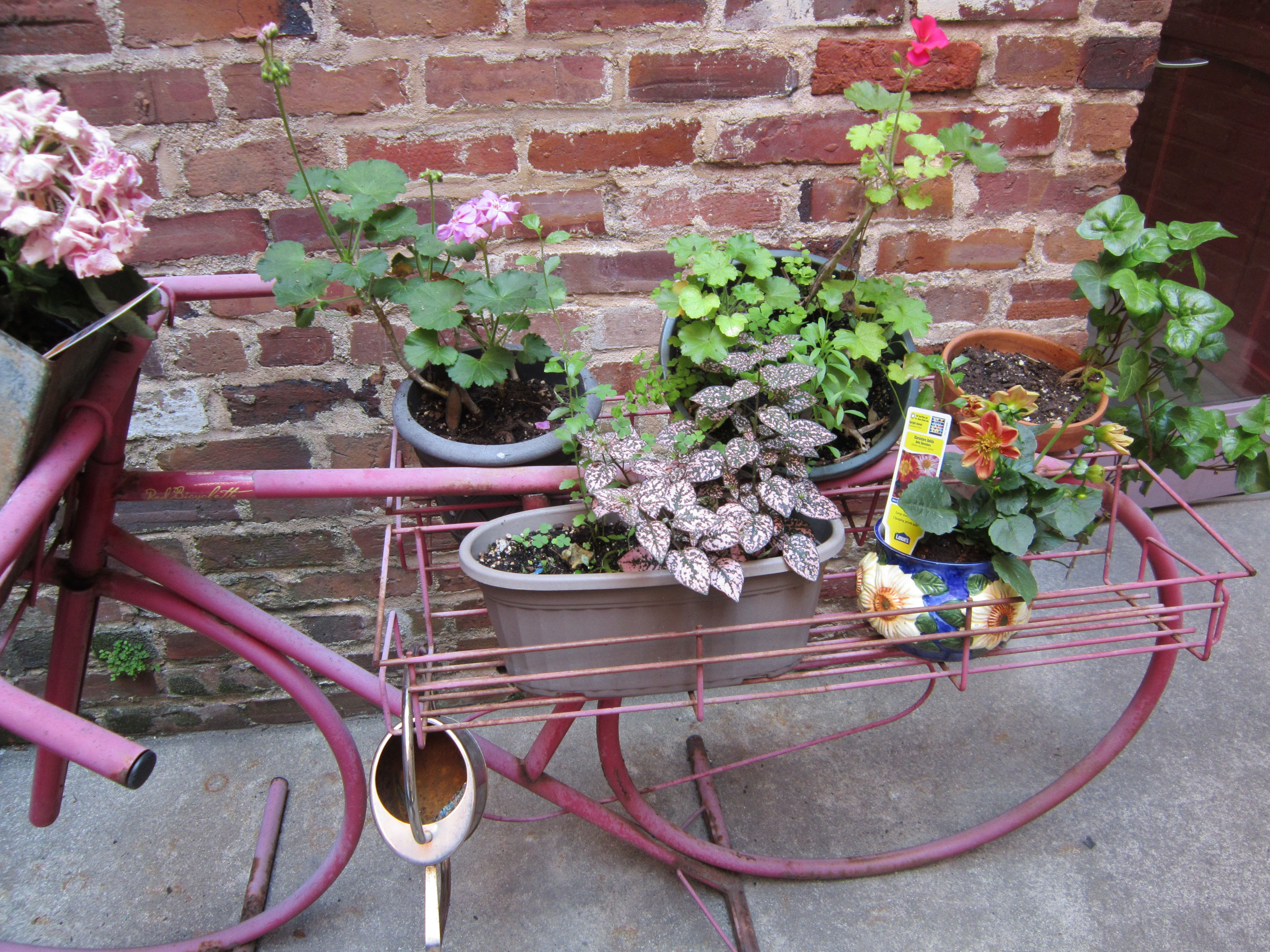 Repurposed wine display used as a plant stand