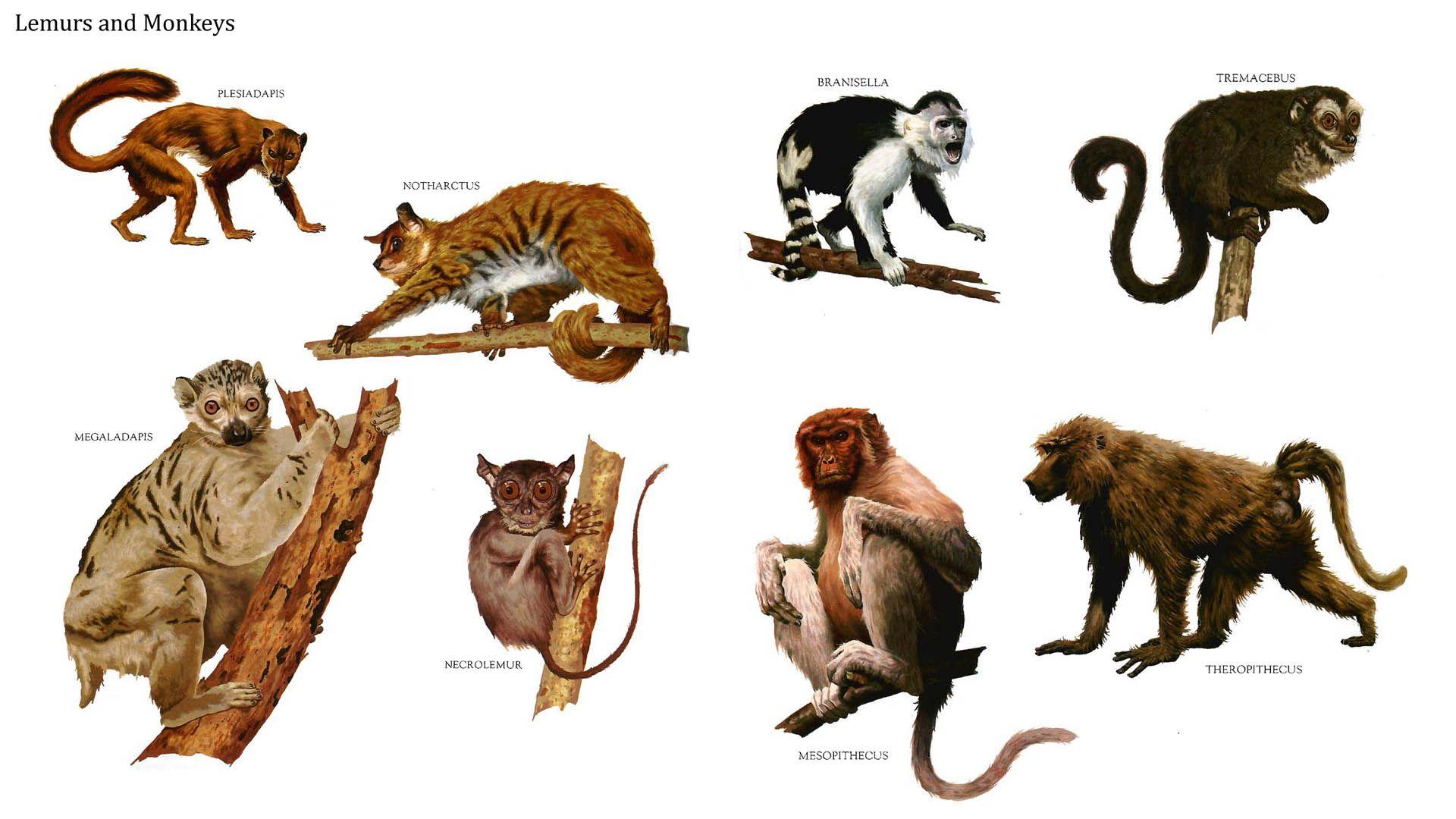 Lemus and Monkeys. Row 1: Plesiadapis, Notharctus, Branisella; Row 2: Megaladapis, Necrolemur, Mesopithecus, Theropithecus.
