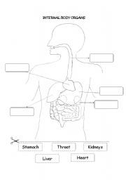English worksheet internal body organs human anatomy pinterest english worksheet internal body organs ccuart Images