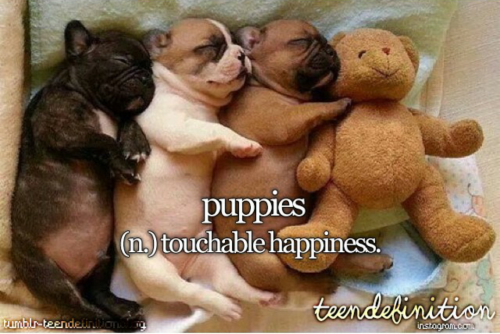 puppies touchable happiness teendefinition Cute