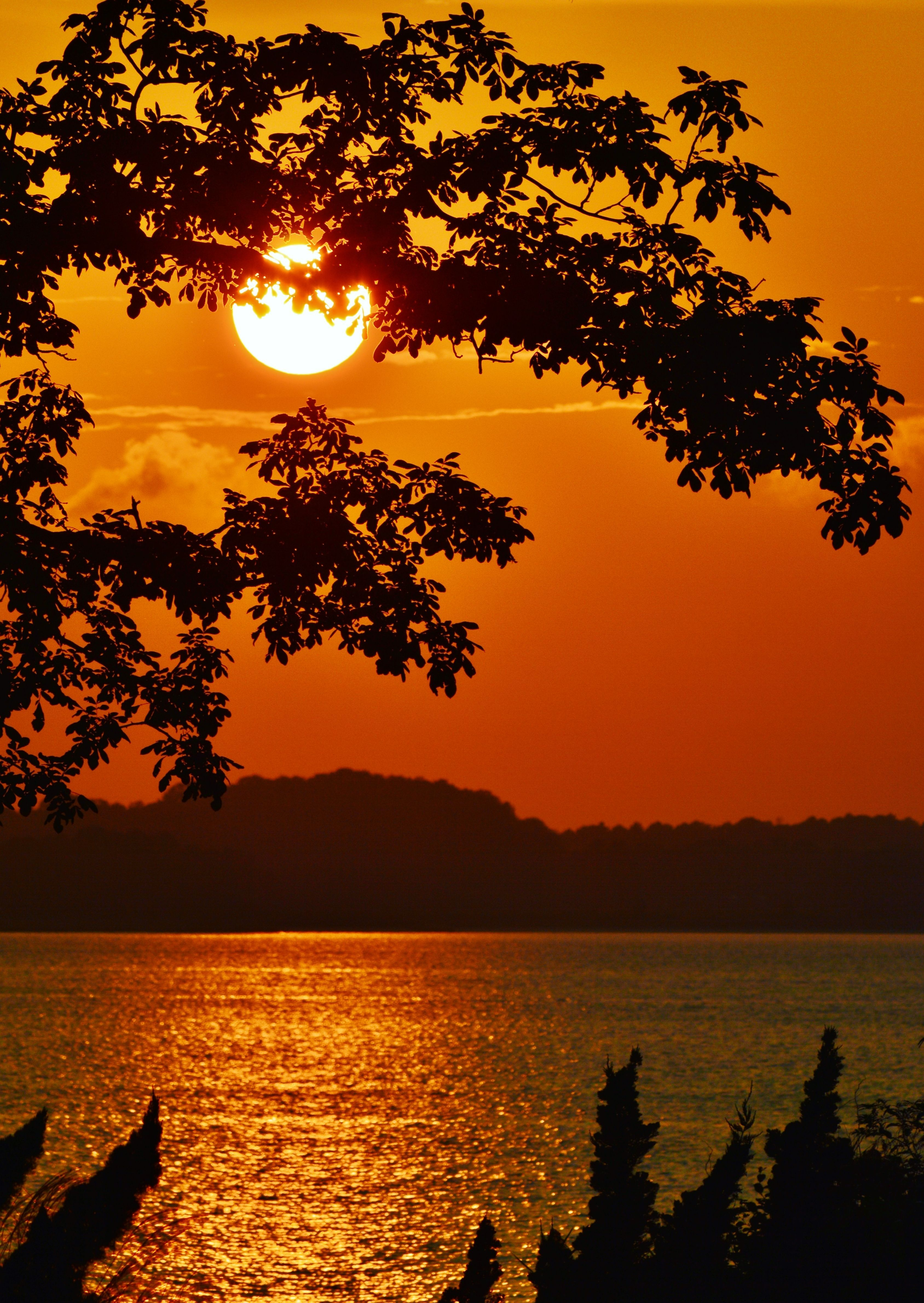 Paradise Poster Zazzle Com Magariungiorno A View Through The Trees Of A Golden Sunset On The Bay Beautiful Nature Wallpaper Sunset Nature Sunset Photography