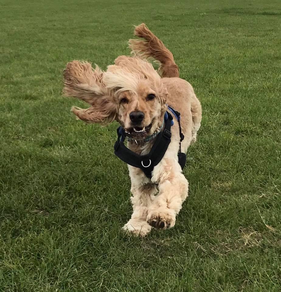 Best Behaviour Dog Training Stowmarket, Suffolk. England