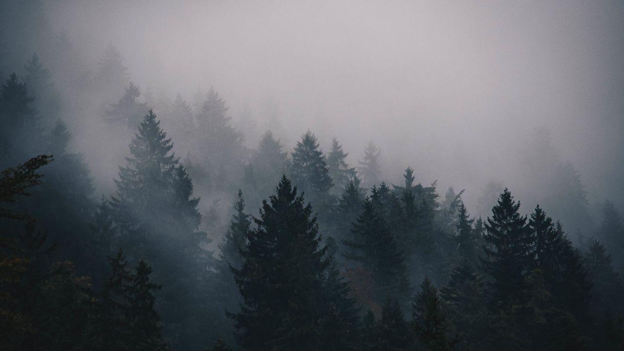 Fog 5k 4k Wallpaper Trees Forest Horizontal Forest Photos Forest Wallpaper Forest Landscape