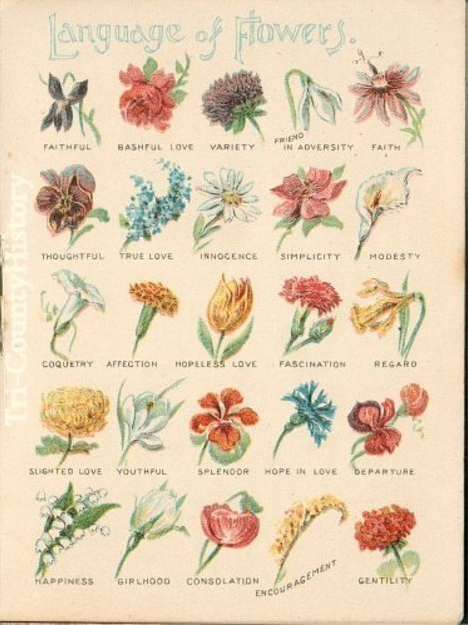 Language of flowers and the fiction book by the same for Floar meaning
